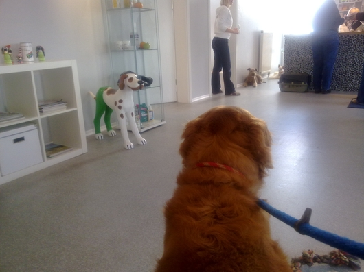 blog-tierarztwartezimmer.jpg