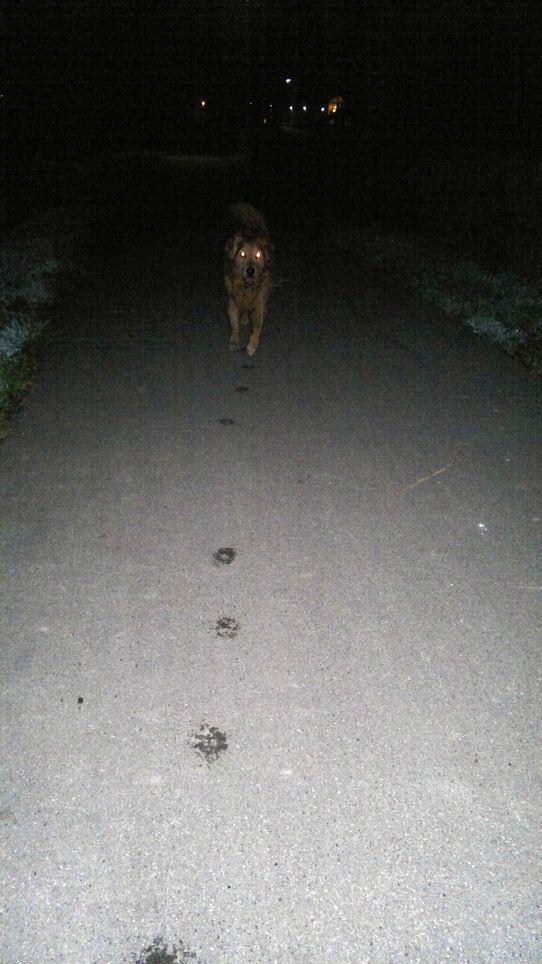 blog-morgens-mit-hund-joggen.jpg