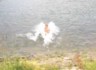 blog-vatertagsschwimmen-hund-gandhi-schwimmt-im-rhein-1.jpg