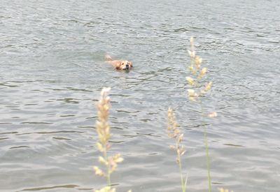 blog-vatertagsschwimmen-hund-gandhi-schwimmt-im-rhein-3.jpg