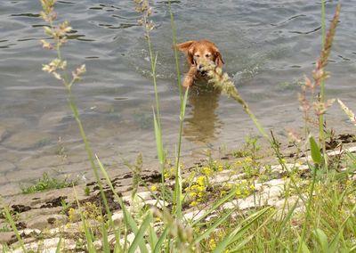 blog-vatertagsschwimmen-hund-gandhi-schwimmt-im-rhein-4.jpg