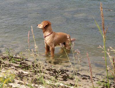blog-vatertagsschwimmen-hund-gandhi-schwimmt-im-rhein-5.jpg