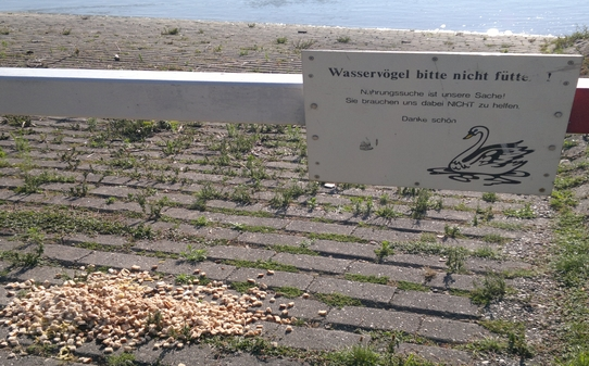 blog-wasservogel-nicht-futtern-1-05072011.jpg