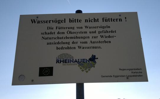 blog-wasservogel-nicht-futtern-2-05072011.jpg