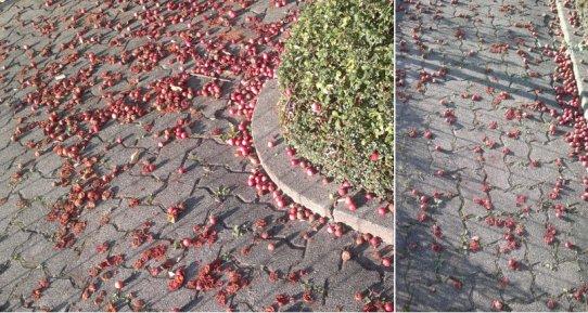 fruchtmatsche-auf-strase-und-gehweg.jpg